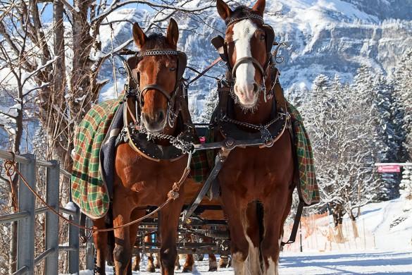 Winterurlaub - Flachau - Pferdeschlitten